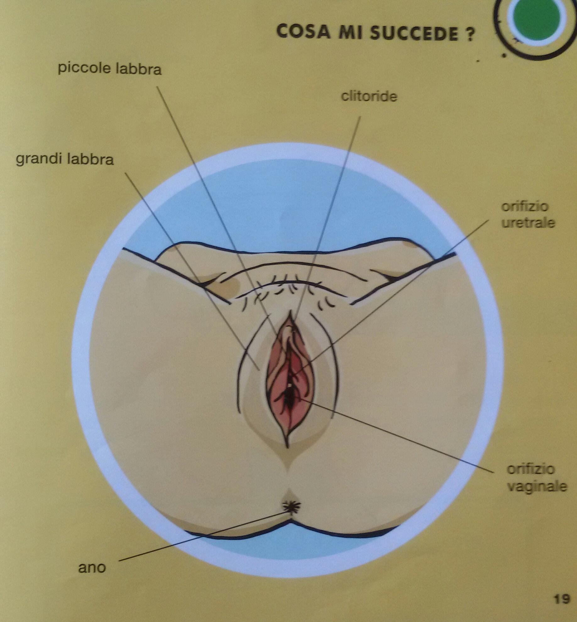 penis.jpg